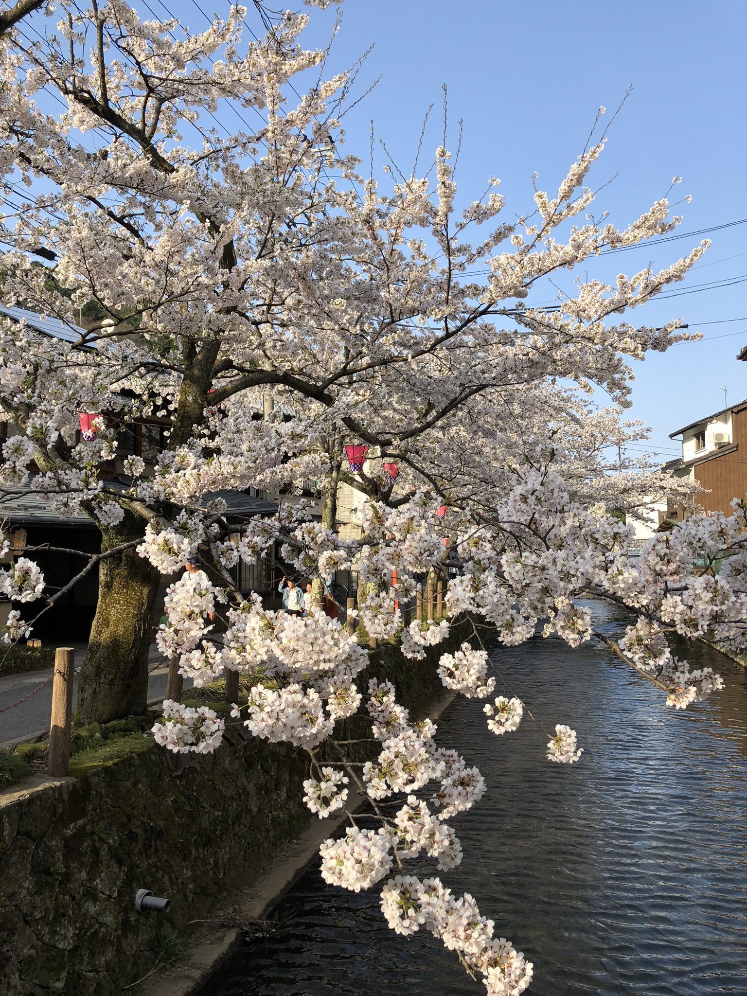 https://www.kinosaki-tajimaya.co.jp/wakadanna/19d9aeda50363e33e36276d30fea2fb51c891f90.jpg